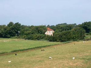 Lammetjes Texel